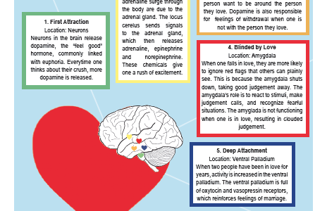 The Brain in Love